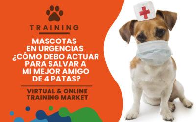 Mascotas en urgencias ¿Cómo debo actuar para salvar a mi mejor amigo de 4 patas?